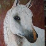 11. 'Paard' acryl